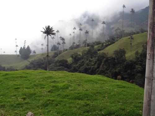 Wax Palms Salento Columbia