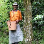 Coffee picker Columbia